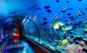 SIAM-OCEAN-WORLD_2012110151251637