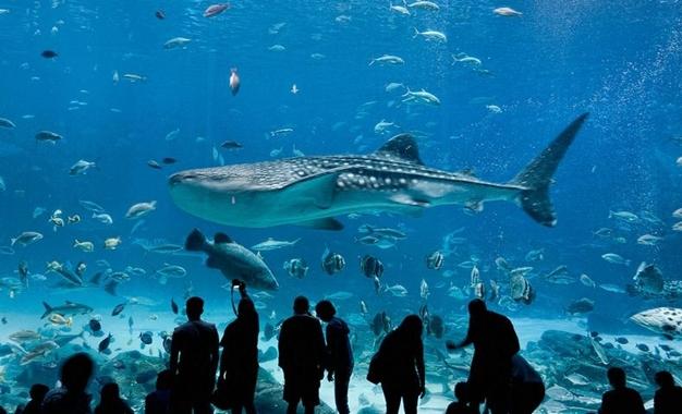 georgia-aquarium-7